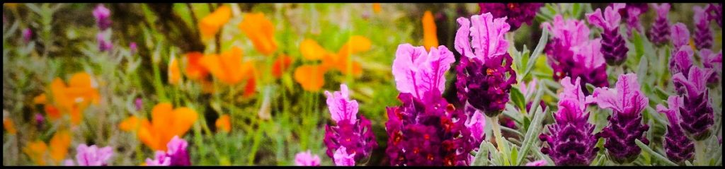 Springville Flowers